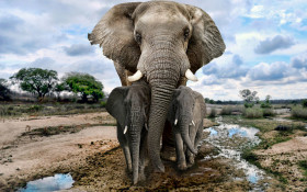 [WATCH] Women running from herd of elephants at Kruger National Park goes viral