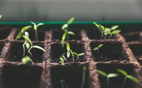 [LISTEN] 'Garden of Blessings' feeding a community in need