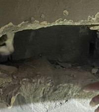 [PHOTOS] Lucky Tableview cat rescued after accidentally being plastered in wall