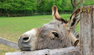 Demand for donkey skin in China lead to barbaric killings in SA