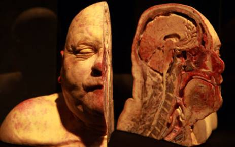 A preserved corpse is seen on display as part of the Body Worlds exhibition by Dr. Gunther von Hagens at the V&A Waterfront in Cape Town on Wednesday, 31 October 2012. Von Hagens is a controversial German anatomist who invented the technique for preserving biological tissue specimens called plastination. Picture: Nardus Engelbrecht/SAPA.