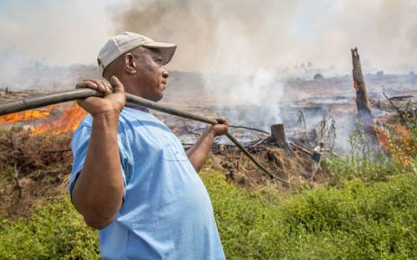 FILE: Volunteers from neighbouring farms helped farmworkers and firefighters to keep the flames at bay at the Muratie Wine Estate on 22 January 2016. Picture: Aletta Harrison/EWN