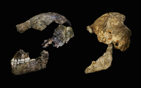 Homo Naledi. Picture: Supplied.