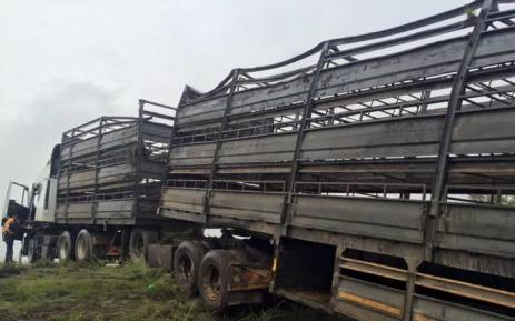 The truck, carrying just over 800 sheep, overturned in the early hours of this morning. Picture: SPCA