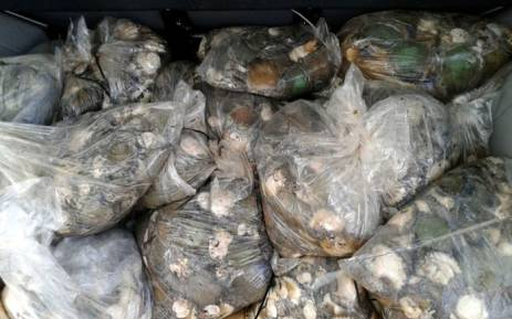 FILE: Abalone. Picture: @SAPoliceService via Twitter
