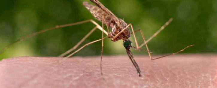 FILE: A feeding female 'Anopheles sinensis' mosquito on a human hand. Picture: CDC/James Gathany.