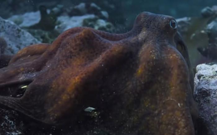 SA documentary 'My Octopus Teacher' scoops Bafta award
