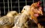 Chicken. Picture: sxc.hu