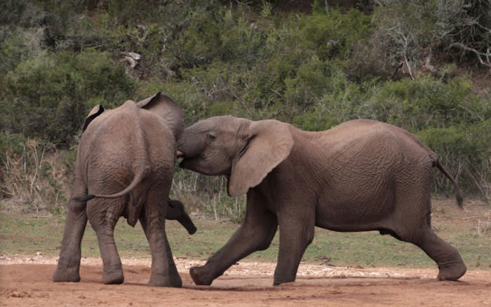 Picture: Addo Elephant National Park