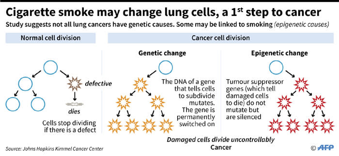 Illustration of how cigarette smoke might change lung cells, leading to cancer, according to a study just released by Johns Hopkins Kimmel Cancer Center.