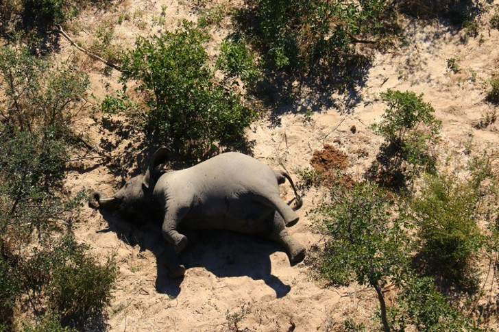SA scientists share fears over mysterious deaths of elephants
