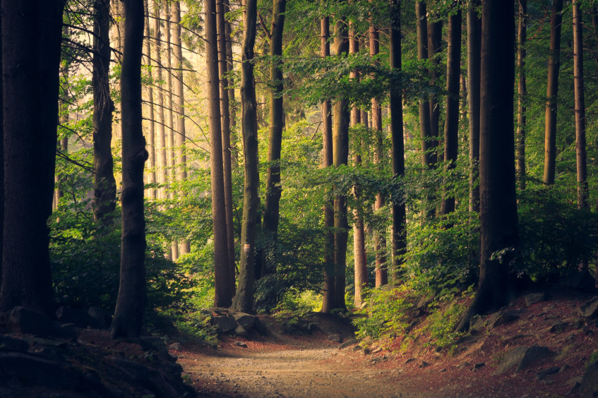 Are you a psychopath? Take this creepy walk-through-the-forest test