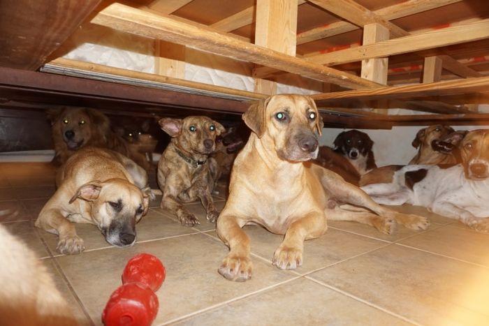 PHOTOS] Woman takes 97 dogs into home during Hurricane Dorian