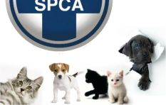 Children in animal cruelty video could be tomorrow's killers, warns SPCA