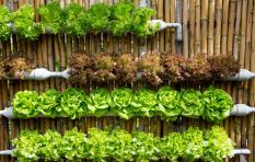 Philippi households to get lessons on hydroponics