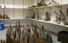 Should SA sell its huge rhino horn stockpile?