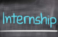 Companies are improving treatment of interns - staffing expert