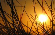 Heatwave hits Gauteng 'till Saturday