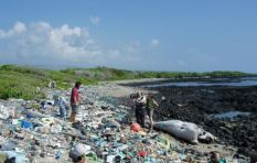 Plastic bags are a huge threat to marine life - Rethink the Bag campaign