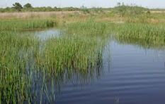 R2.5bn 'fake' wetland could save WC farms