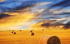 Taking land without payment – how will it boost production? Agri SA discusses…