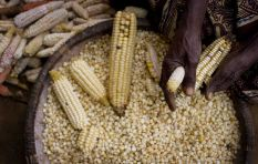 SA drought may take its toll on food security - agricultural expert