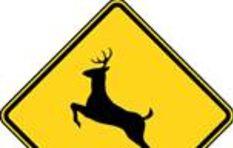 Dangerous deer crossings