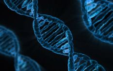 How the discovery of DNA 65 years ago totally revolutionised medical science