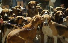 Six arrested for illegal hunting with dogs
