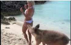 [WATCH] Revenge of the bacon as pig takes bite at model's bum!
