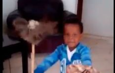 [WATCH] Adorable boy does the Zulu dance with so much perfection