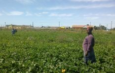 Women produce 80% of agriculture on the continent but own only 1% of land