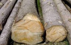Get all your tree felling needs done proffessionally by Mr B Treefelling