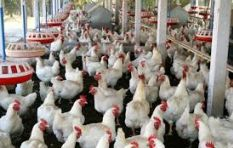 Reports of H5N8 bird flu in South Africa