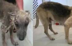 Abandoned dog creeps into rescuers hearts, and makes a remarkable recovery