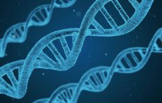 Africa gets first genome sequencing facility
