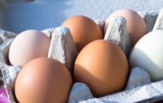 WC egg prices may rise over retail shortage caused by bird flu