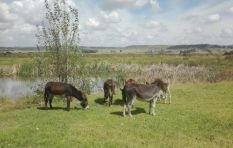 It's Home Sweet Home for Donkey Survivors