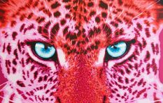 Predators in pink - local artist draws inspiration from the Big Five
