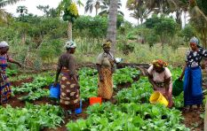 Women played an historic role in small scale farming in Africa - researcher