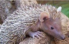 Bring back the hedgehog! - WC wildlife centre