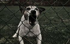 Negligent pet owners will face consequences, City explains