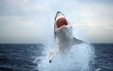 The Science Inside: Shark Attacks