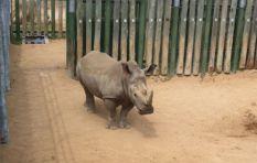 100 CitesCoP 17 parties vote against legalising rhino horn trade