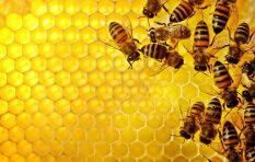 Why humans (and everything else) need bees to survive