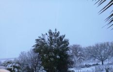 [PICTURES] Snuggle up and be warm.... It's snowing
