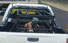 Bakkie cage: Driver reacts after social media outrage