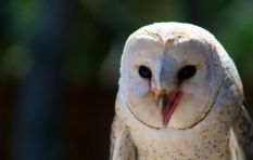 Cultural clashes over Owl Box project