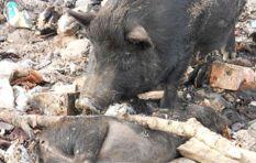The case against Thandi Modise for animal cruelty still pending