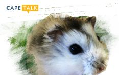 Ronnie the Hamster predicts the Rugby World Cup match outcomes
